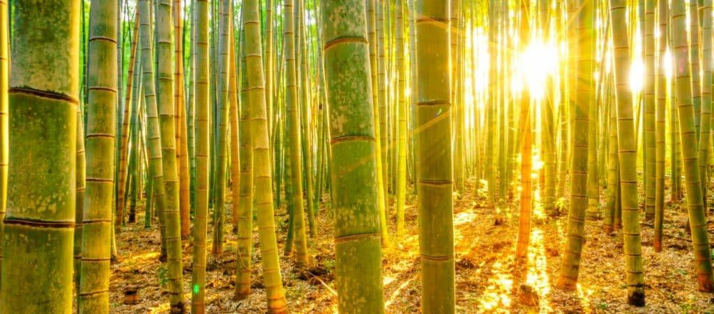 Fengshui Bamboe